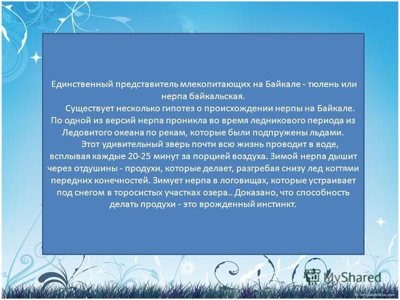 PRESENTATION NAME Company Name Единственный представитель млекопитающих на Байкале - тюлень или нерпа байкальская. Существует несколько гипотез о происхождении нерпы на Байкале. По одной из версий нерпа проникла во время ледникового периода из Ледови