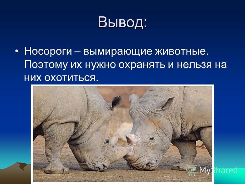 Вывод: Носороги – вымирающие животные. Поэтому их нужно охранять и нельзя на них охотиться.