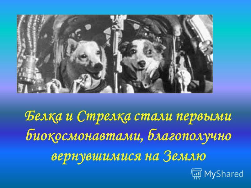 Белка и Стрелка стали первыми био космонавтами, благополучно вернувшимися на Землю