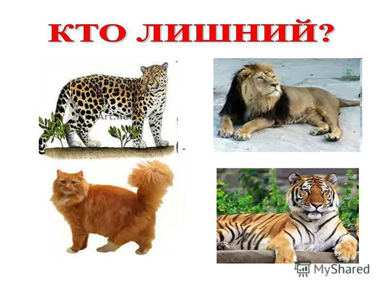 Сиамская Вислоухая Сибирская Персидская