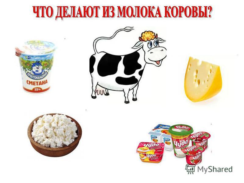 Молочная порода Мясная порода Мясо - молочная порода