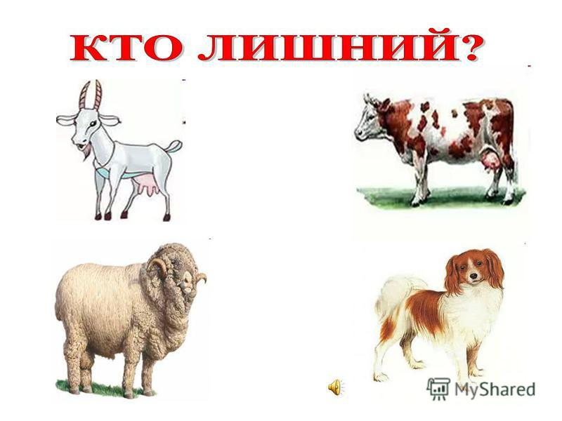 Сторожевые собаки Охотничьи собаки Собаки – поводыри Декоративные собаки