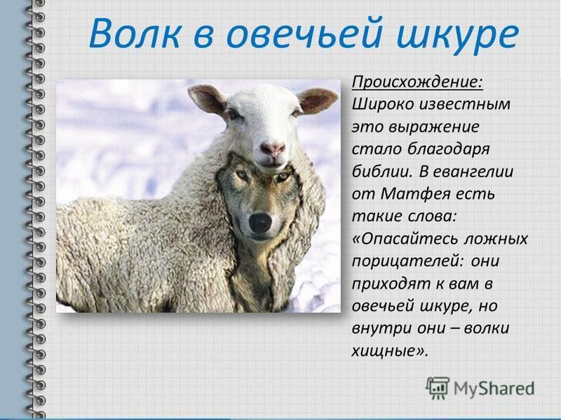 Цитаты о волках в овечьей шкуре