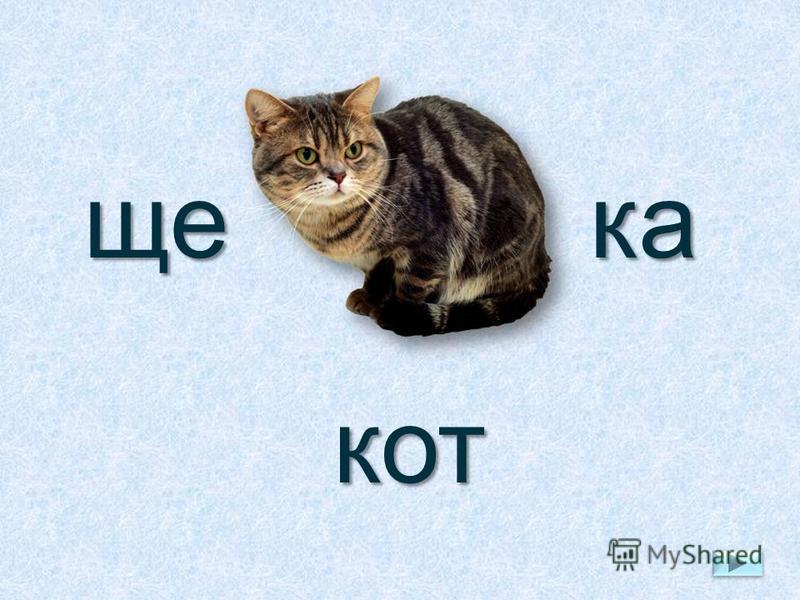 щека кот
