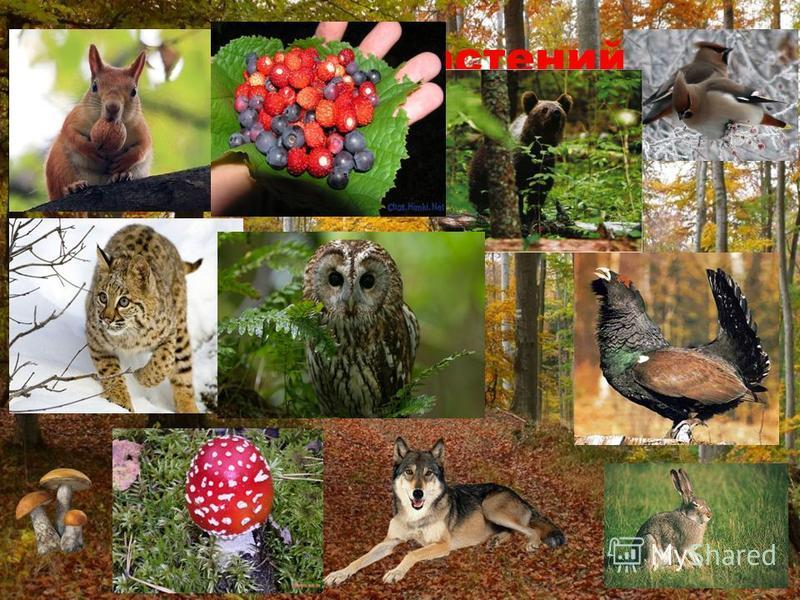 Дом для растений животных, грибов