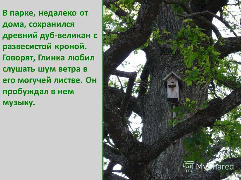 В парке, недалеко от дома, сохранился древний дуб-великан с развесистой кроной. Говорят, Глинка любил слушать шум ветра в его могучей листве. Он пробуждал в нем музыку.