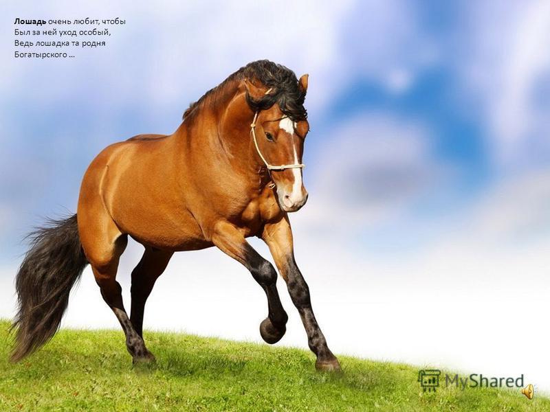 лошадку