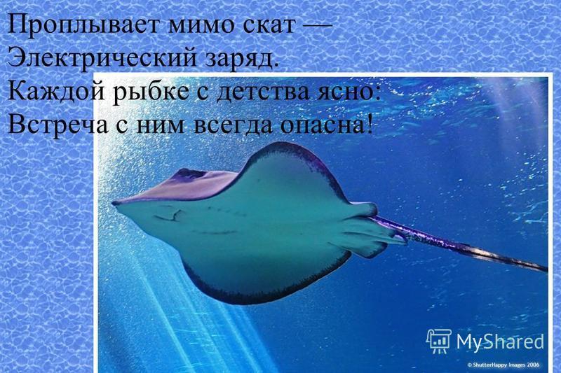 Проплывает мимо скат Электрический заряд. Каждой рыбке с детства ясно: Встреча с ним всегда опасна!