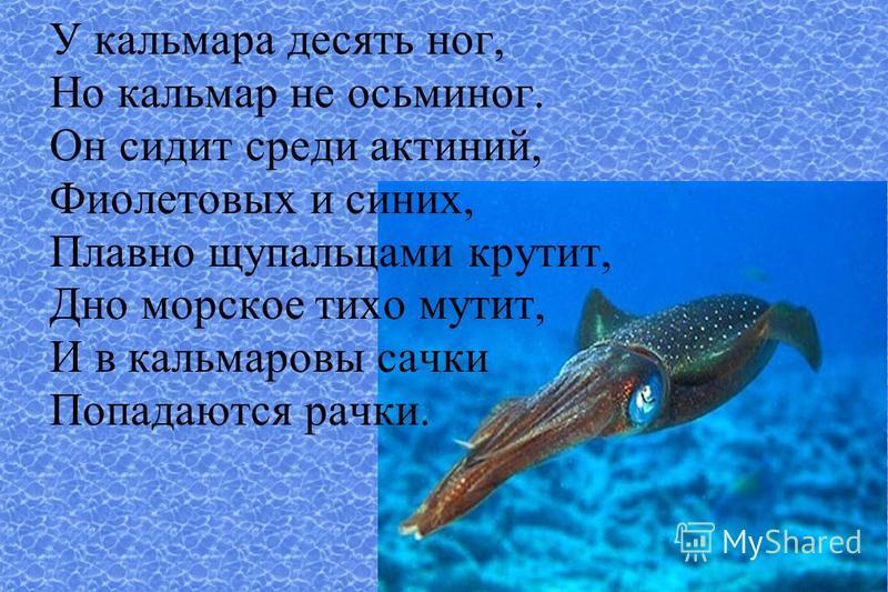 У кальмара десять ног, Но кальмар не осьминог. Он сидит среди актиний, Фиолетовых и синих, Плавно щупальцами крутит, Дно морское тихо мутит, И в кальмаровый сачки Попадаются рачки.