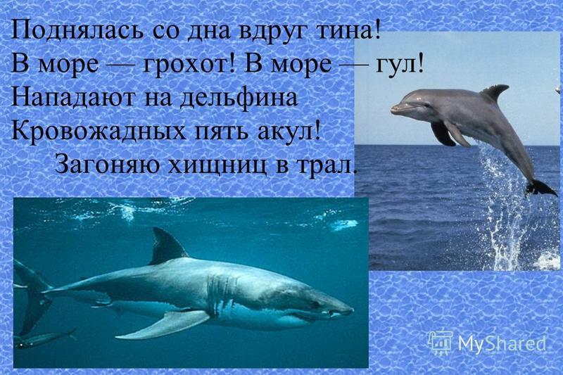 Поднялась со дна вдруг тина! В море грохот! В море гул! Нападают на дельфина Кровожадных пять акул! Загоняю хищниц в трал.