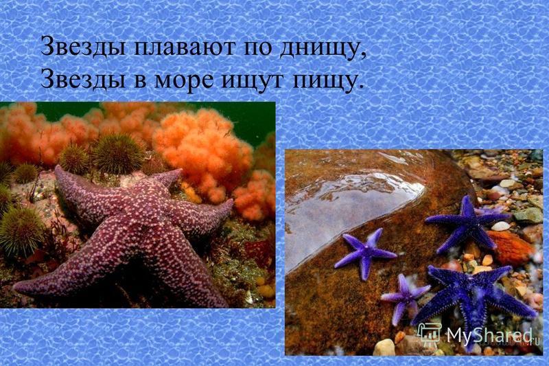 Звезды плавают по днищу, Звезды в море ищут пищу.