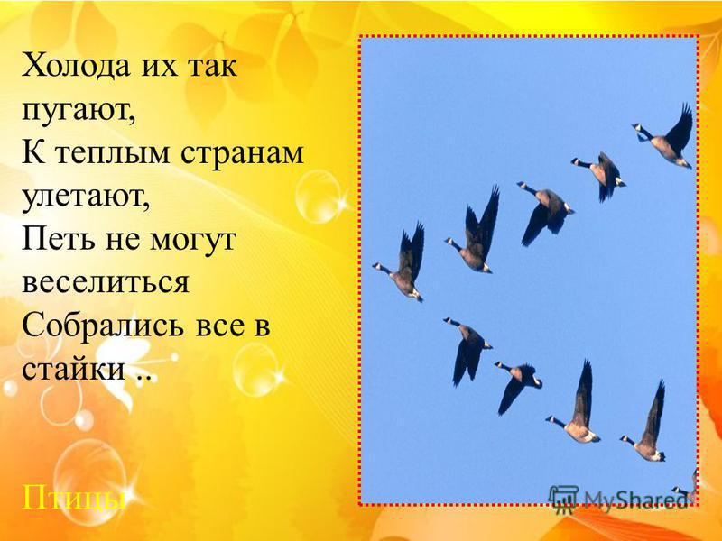 Холода их так пугают, К теплым странам улетают, Петь не могут веселиться Собрались все в стайки.. Птицы