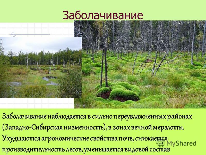 Заболачивание Заболачивание наблюдается в сильно переувлажненных районах (Западно-Сибирская низменность), в зонах вечной мерзлоты. Ухудшаются агрономические свойства почв, снижается производительность лесов, уменьшается видовой состав