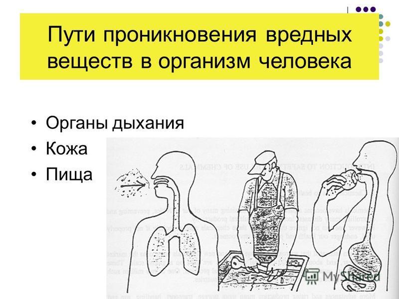 Пути проникновения вредных веществ в организм человека Органы дыхания Кожа Пища