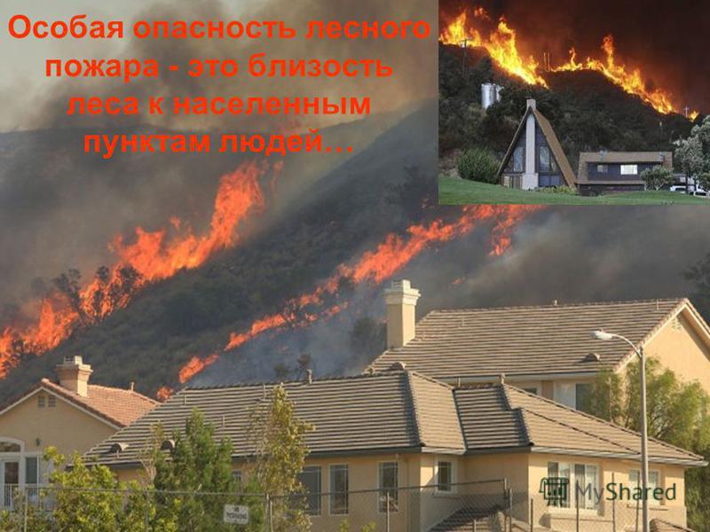 Особая опасность лесного пожара - это близость леса к населенным пунктам людей …