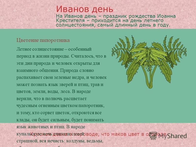 Цветение папоротника Красная девка в хороводе, что маков цвет в огороде Летнее солнцестояние – особенный период в жизни природы. Считалось, что в эти дни природа и человек открыты для взаимного общения. Природа словно распахивает свои зеленые недра,