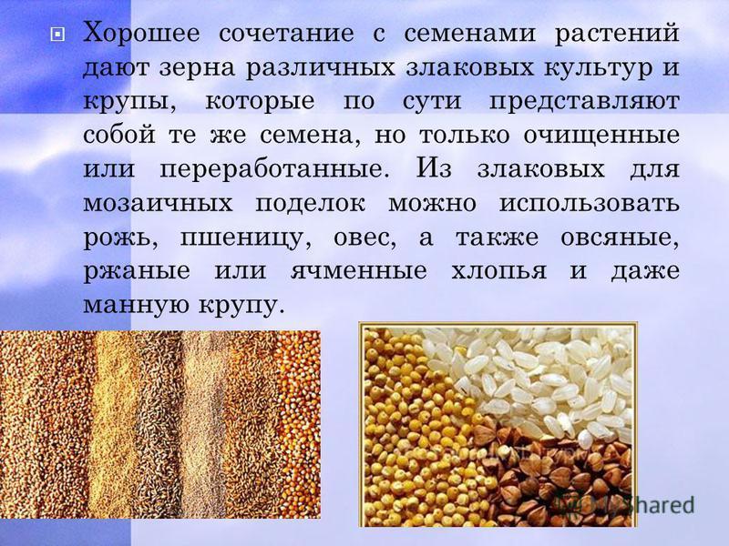 Хорошее сочетание с семенами растений дают зерна различных злаковых культур и крупы, которые по сути представляют собой те же семена, но только очищенные или переработанные. Из злаковых для мозаичных поделок можно использовать рожь, пшеницу, овес, а