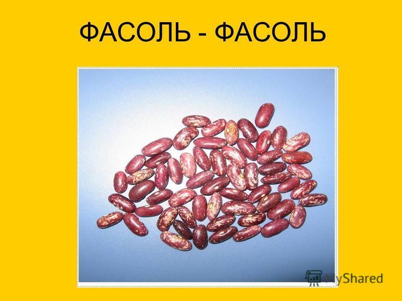 ФАСОЛЬ - ФАСОЛЬ