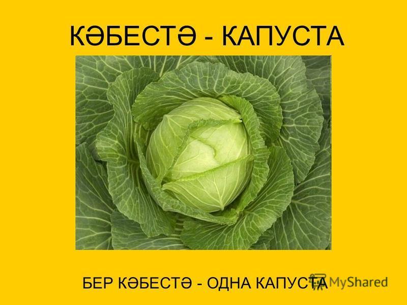 КӘБЕСТӘ - КАПУСТА БЕР КӘБЕСТӘ - ОДНА КАПУСТА
