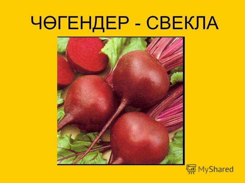 ЧӨГЕНДЕР - СВЕКЛА