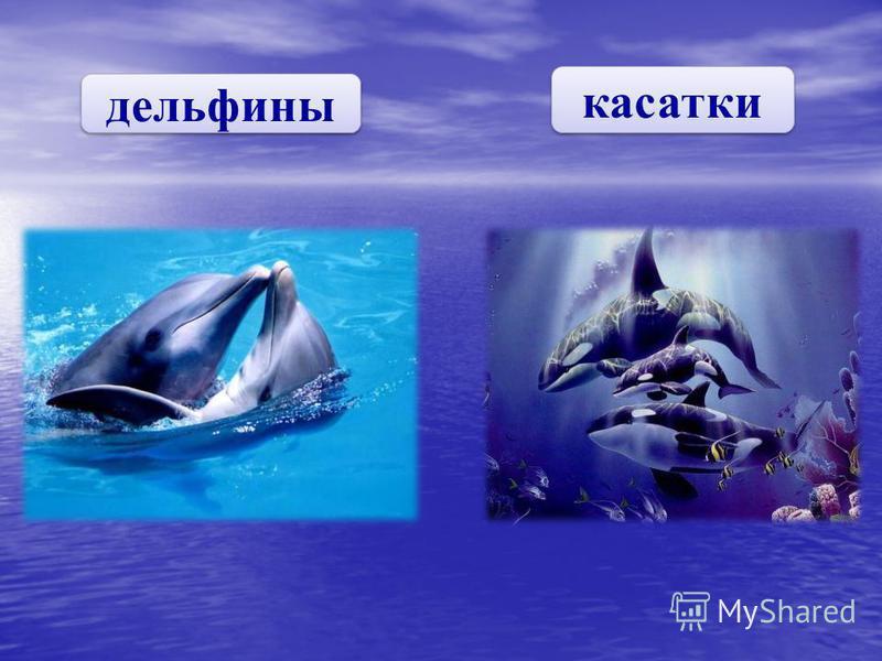 дельфины касатки