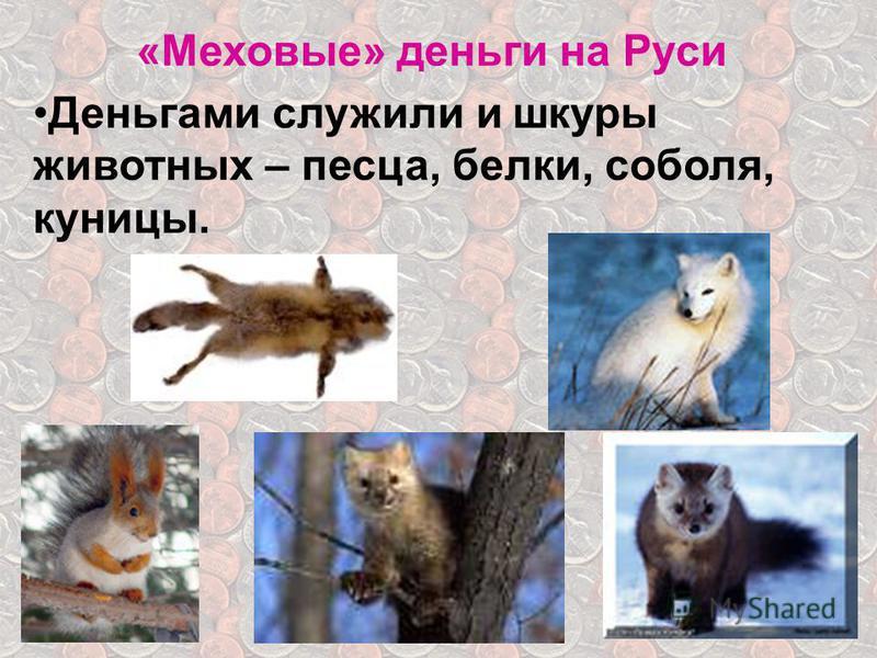 «Меховые» деньги на Руси Деньгами служили и шкуры животных – песца, белки, соболя, куницы.