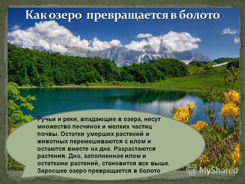 Ручьи и реки, впадающие в озера, несут множество песчинок и мелких частиц почвы. Остатки умерших растений и животных перемешиваются с илом и остаются вместе на дне. Разрастаются растения. Дно, заполненное илом и остатками растений, становится все выш