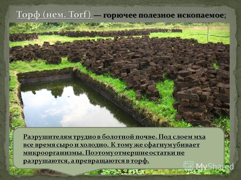 Разрушителям трудно в болотной почве. Под слоем мха все время сыро и холодно. К тому же сфагнум убивает микроорганизмы. Поэтому отмершие остатки не разрушаются, а превращаются в торф. Торф (нем. Torf) горючее полезное ископаемое;