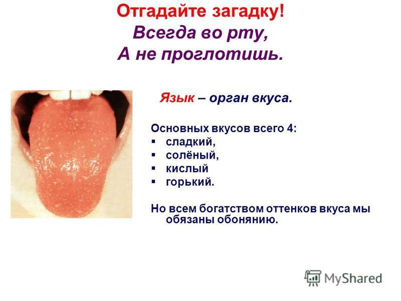 Отгадайте загадку! Всегда во рту, А не проглотишь. Язык – орган вкуса. Основных вкусов всего 4: сладкий, солёный, кислый горький. Но всем богатством оттенков вкуса мы обязаны обонянию.