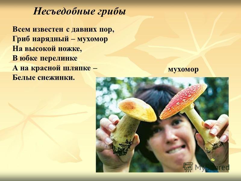 Несъедобные грибы Всем известен с давних пор, Гриб нарядный – мухомор На высокой ножке, В юбке перелинке А на красной шляпке – Белые снежинки. мухомор