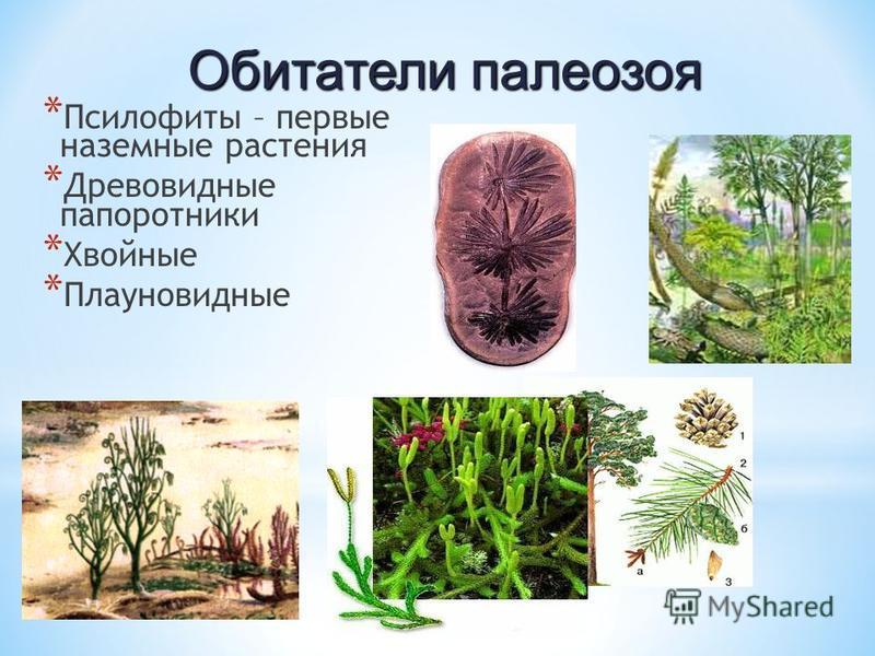 * Псилофиты – первые наземные растения * Древовидные папоротники * Хвойные * Плауновидные Обитатели палеозоя