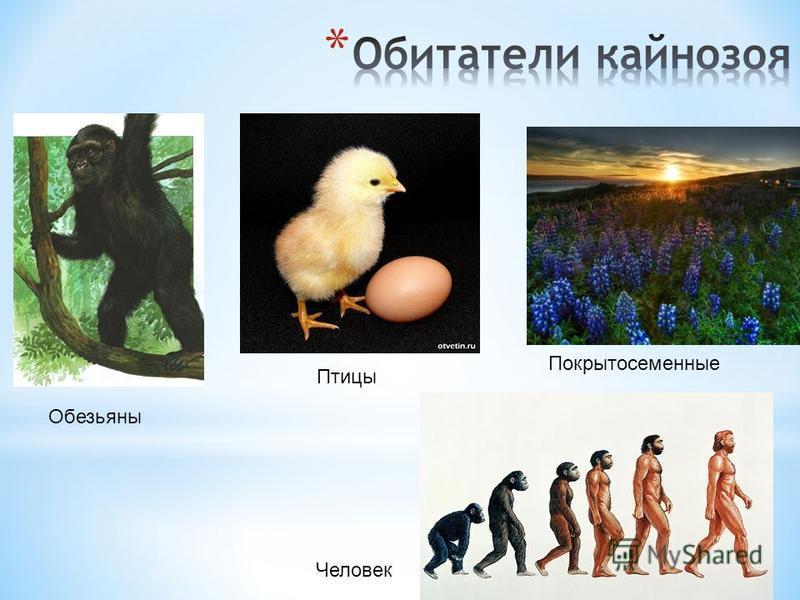 Обезьяны Птицы Покрытосеменные Человек
