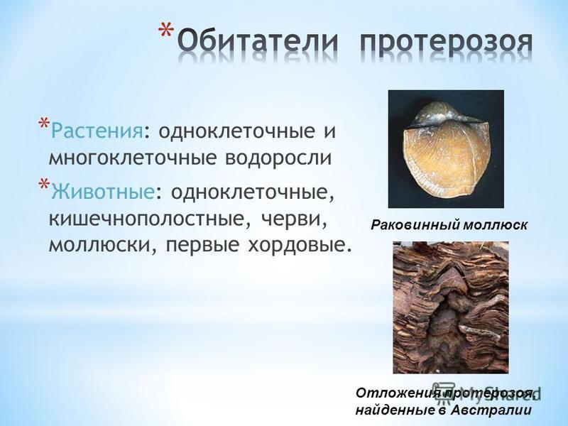 * Растения: одноклеточные и многоклеточные водоросли * Животные: одноклеточные, кишечнополостные, черви, моллюски, первые хордовые. Раковинный моллюск Отложения протерозоя, найденные в Австралии