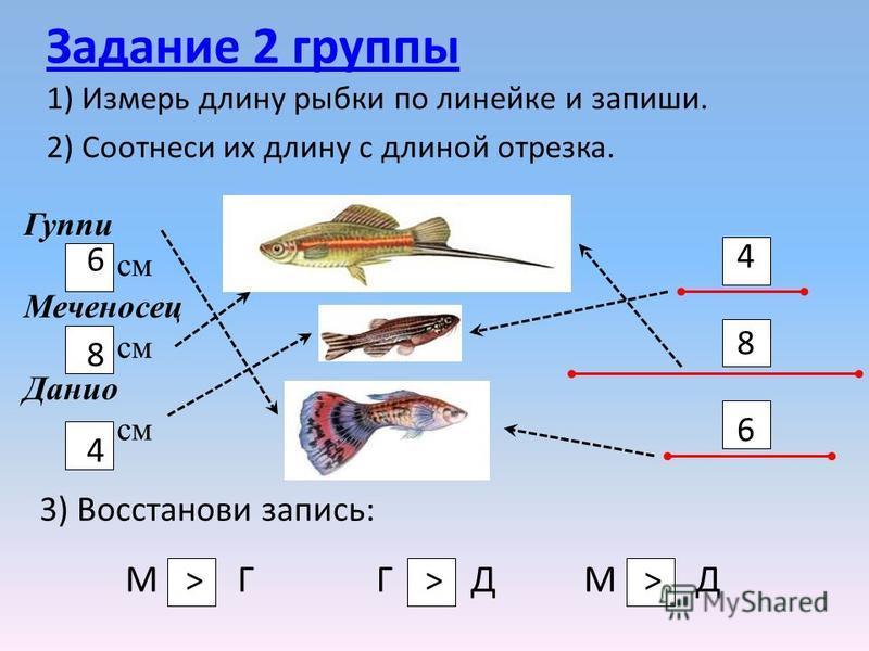 Задание 2 группы 1) Измерь длину рыбки по линейке и запиши. 2) Соотнеси их длину с длиной отрезка. Гуппи см Меченосец см Данио см 684684 486486 3) Восстанови запись: М Г Г Д М Д >>>