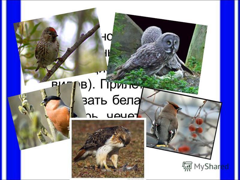 Большинство птиц – перелетные и кочующие (около 160 видов). Прилетают зимовать белая сова, снегирь, чечетка, свиристель, канюк.