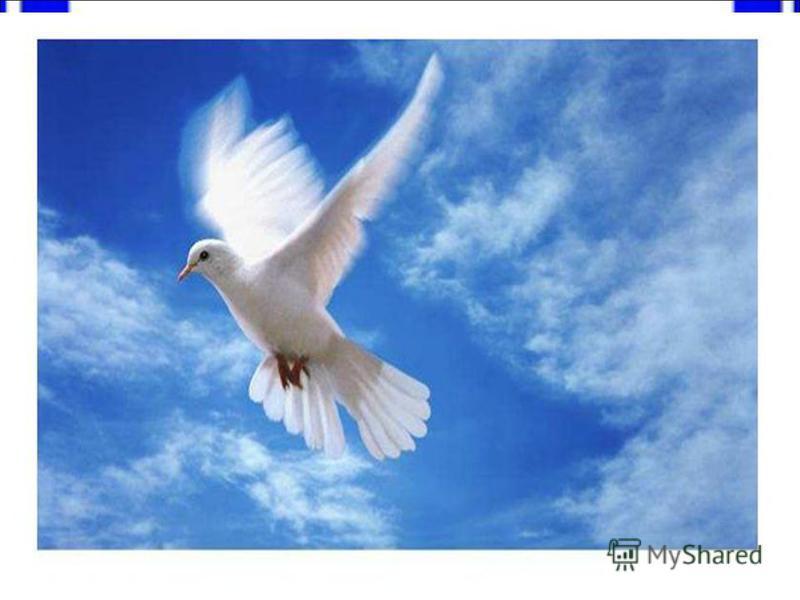 голубь Какую птицу считают символом мира.