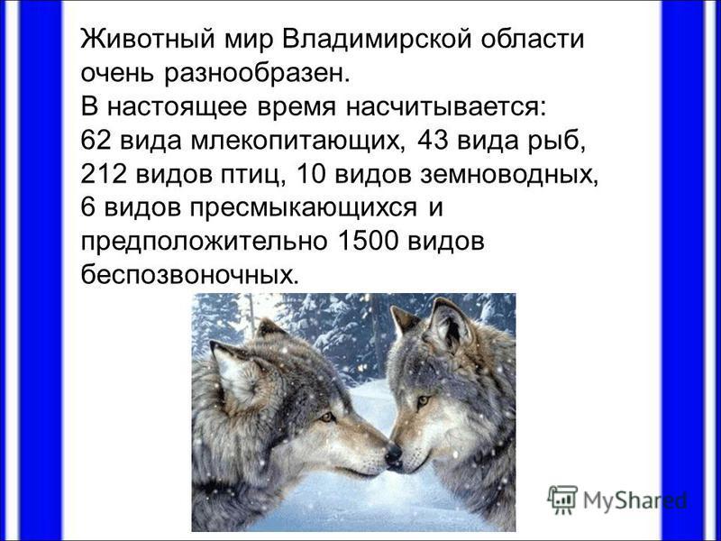 Животный мир Владимирской области очень разнообразен. В настоящее время насчитывается: 62 вида млекопитающих, 43 вида рыб, 212 видов птиц, 10 видов земноводных, 6 видов пресмыкающихся и предположительно 1500 видов беспозвоночных.