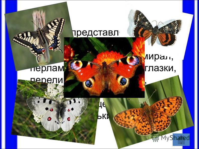 Бабочки представлены следующими видами: махаон, подалирий, аполлон, адмирал, перламутровки, павлиноглазки, переливницы, пяденицы, совки, мохнатые шелкопряды, изящные пальцекрылки, ночные мотыльки и бражники.