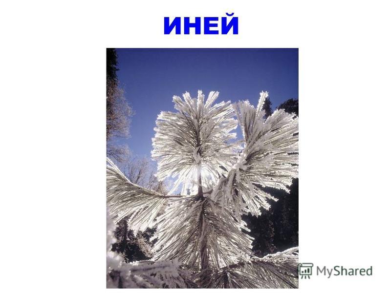 И не снег, и не лед, А серебром деревья уберет.
