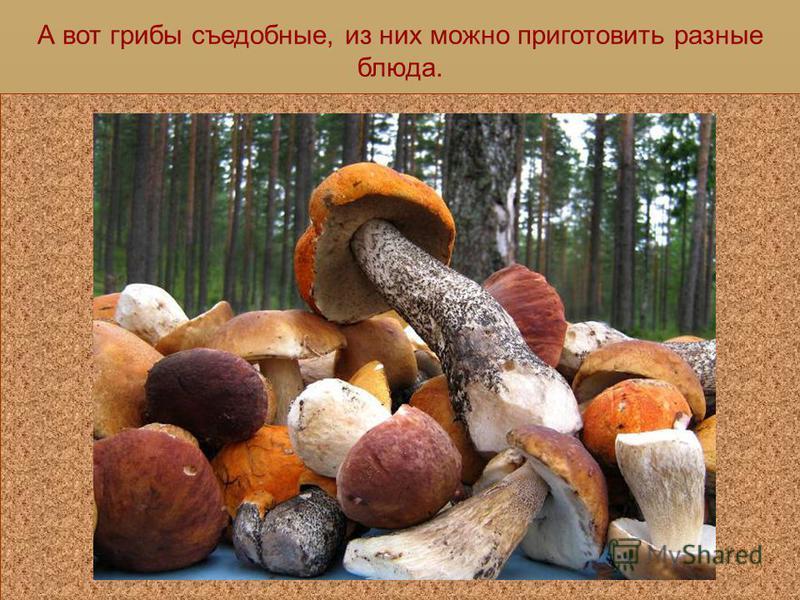 Эти грибы тоже несъедобные, поэтому мы пройдем мимо и будем искать в лесу съедобные грибы.