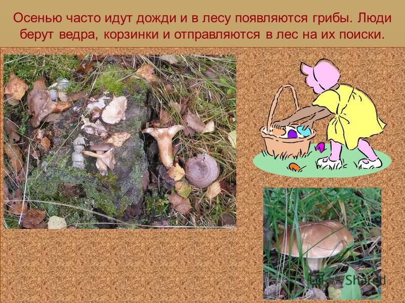 ГРИБНОЙ СЕЗОН Детская Электронная Книга