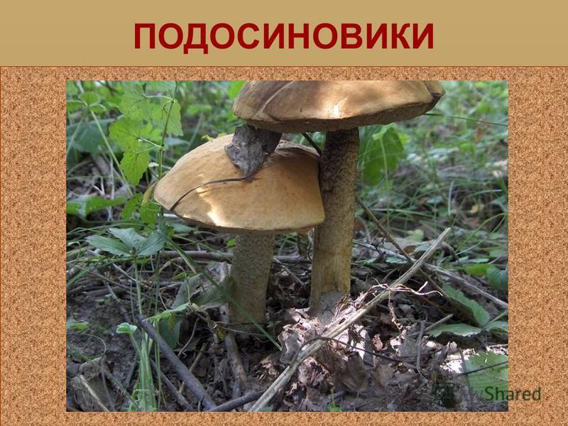 ГРУЗДЬ
