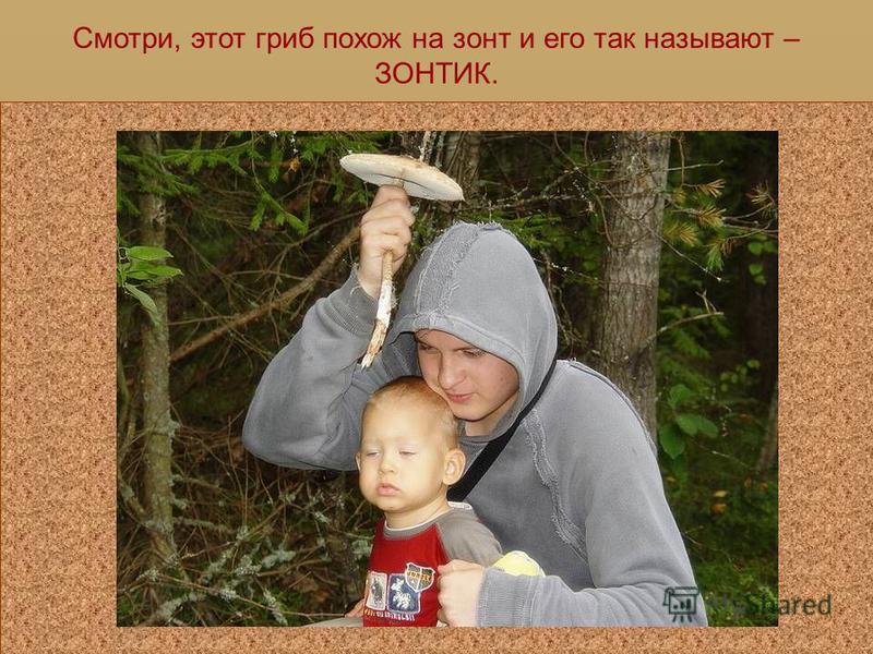 Давай и мы с тобой отправимся в лес за грибами.