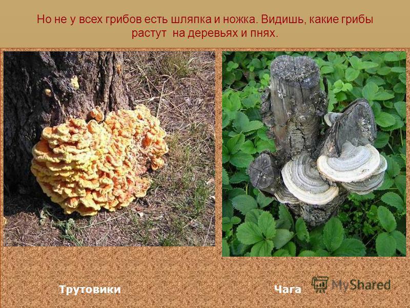 Строение гриба Шляпка Ножка Поры