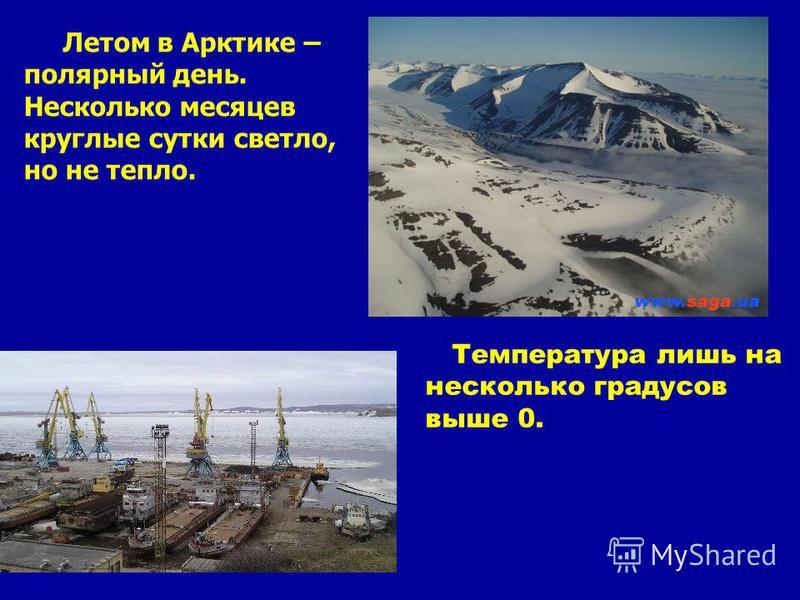 Летом в Арктике – полярный день. Несколько месяцев круглые сутки светло, но не тепло. Температура лишь на несколько градусов выше 0.