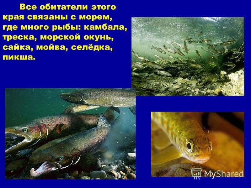 Все обитатели этого края связаны с морем, где много рыбы: камбала, треска, морской окунь, сайка, мойва, селёдка, пикша.