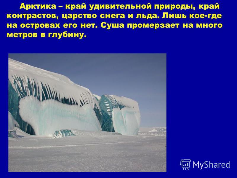 Арктика – край удивительной природы, край контрастов, царство снега и льда. Лишь кое-где на островах его нет. Суша промерзает на много метров в глубину.