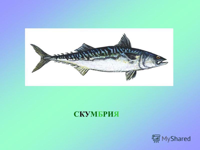 СЕЛЬДЬ В море живет очень много разных рыб. Давай познакомимся с ними. Вот плывет - сельдь.