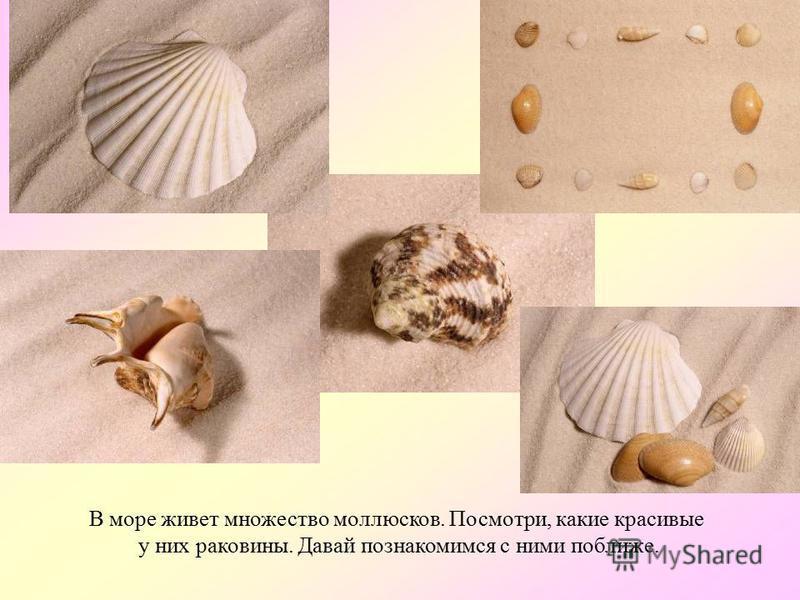 А это – медуза аурелия. Она маленькая и не ядовитая. Правда, похожа на желе? АУРЕЛИЯ