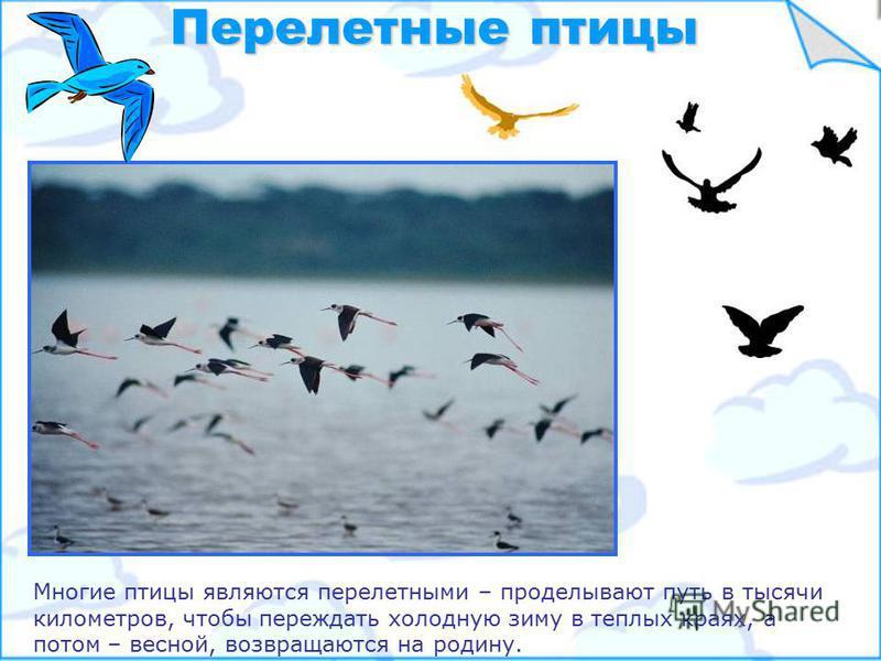 Несмотря на различия, у птиц есть общие признаки – у них у всех есть крылья, перья, клюв Общие признаки